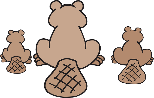 Best Beaver Stickers messages sticker-9