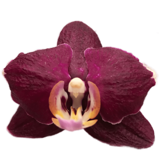 Real Orchid Stickers messages sticker-3