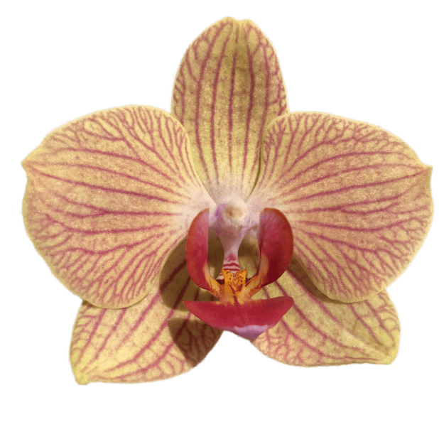 Real Orchid Stickers messages sticker-2