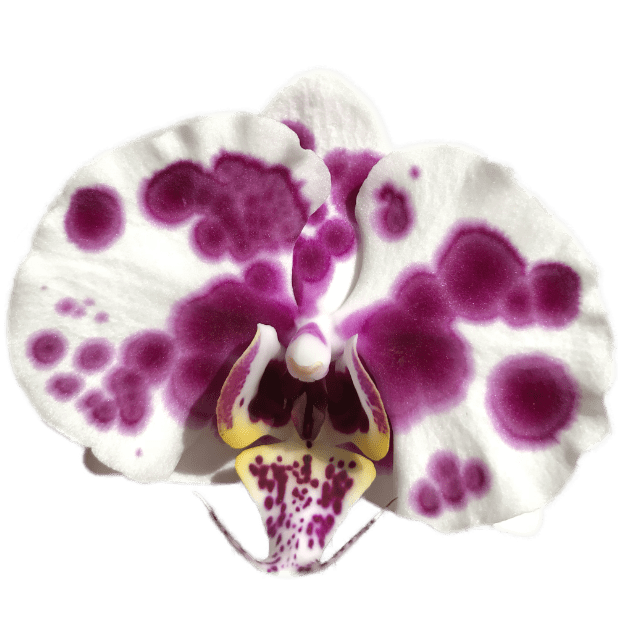 Real Orchid Stickers messages sticker-7