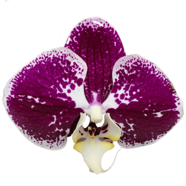 Real Orchid Stickers messages sticker-0