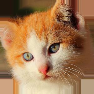Cat Calendar 2019 messages sticker-6
