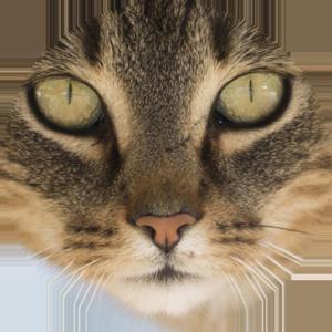 Cat Calendar 2019 messages sticker-5