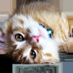 Cat Calendar 2019 messages sticker-7