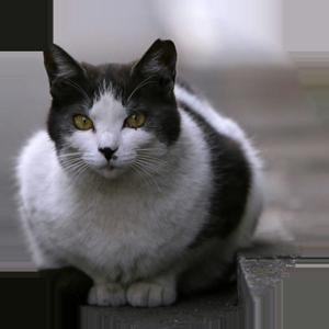 Cat Calendar 2019 messages sticker-11