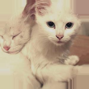 Cat Calendar 2019 messages sticker-0