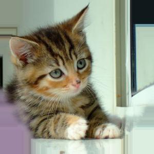 Cat Calendar 2019 messages sticker-2