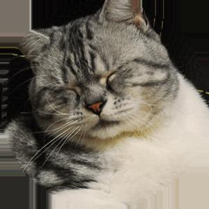 Cat Calendar 2019 messages sticker-10