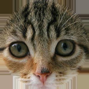 Cat Calendar 2019 messages sticker-9