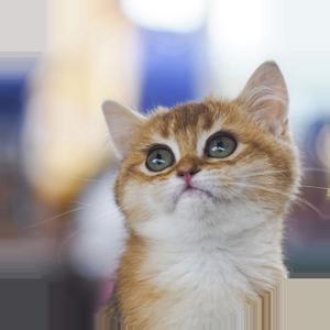 Cat Calendar 2019 messages sticker-1