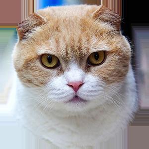 Cat Calendar 2019 messages sticker-4