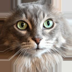 Cat Calendar 2019 messages sticker-8