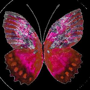 Haulwen Butterflies messages sticker-0