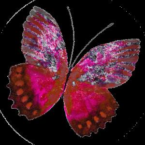 Haulwen Butterflies messages sticker-4
