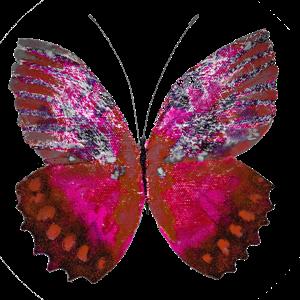 Haulwen Butterflies messages sticker-1