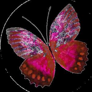 Haulwen Butterflies messages sticker-3