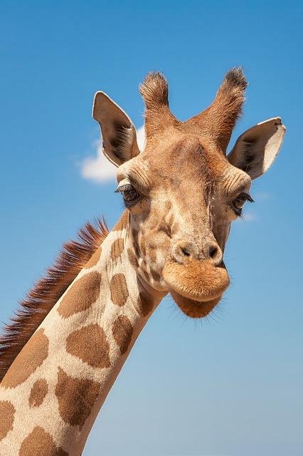 Lotsa Giraffe Stickers messages sticker-0