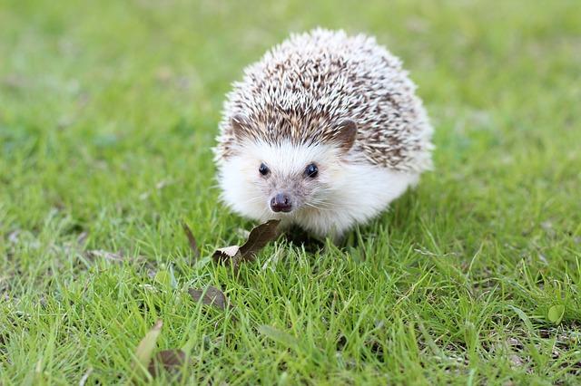 My Hedgehog Stickers messages sticker-1