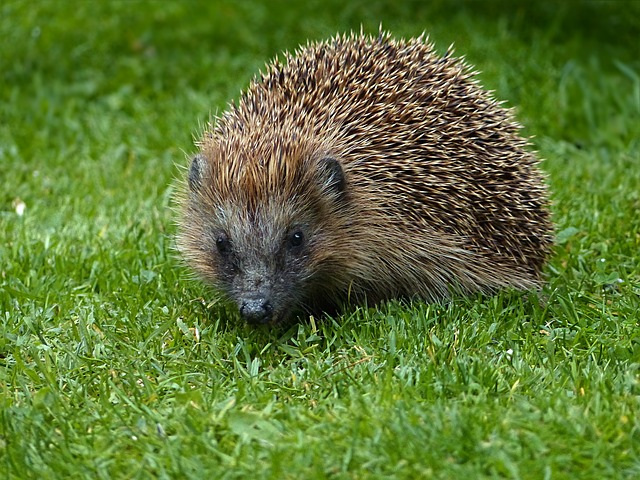 My Hedgehog Stickers messages sticker-11
