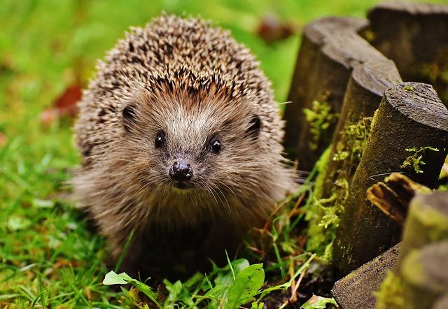 My Hedgehog Stickers messages sticker-4