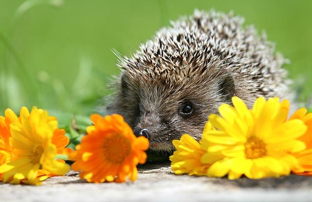 My Hedgehog Stickers messages sticker-0