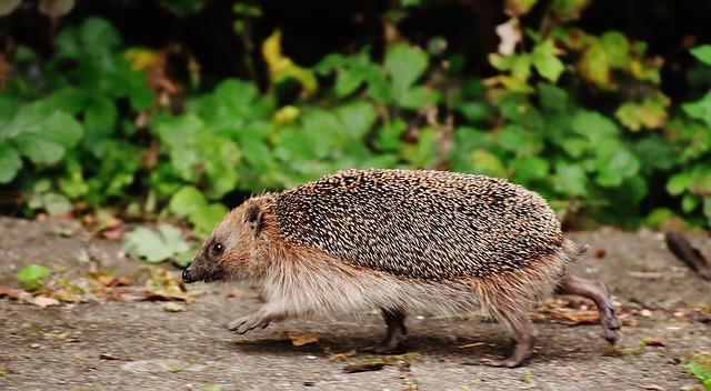 My Hedgehog Stickers messages sticker-6