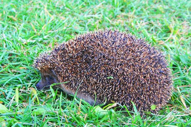 My Hedgehog Stickers messages sticker-5
