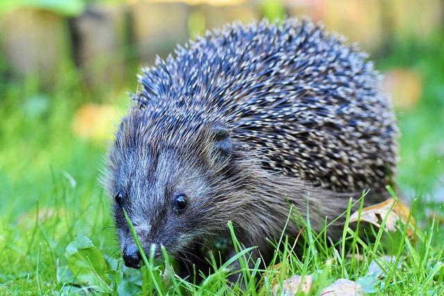 My Hedgehog Stickers messages sticker-3