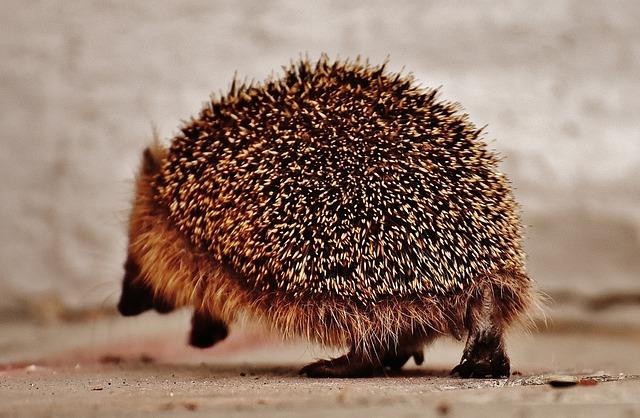 My Hedgehog Stickers messages sticker-9