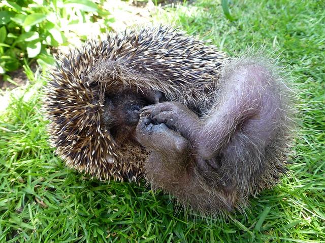My Hedgehog Stickers messages sticker-8