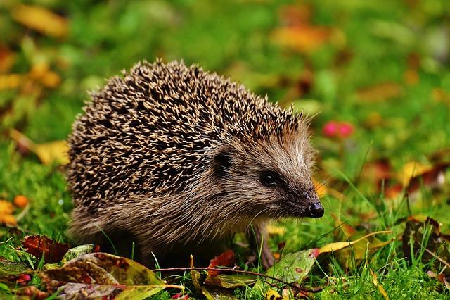 My Hedgehog Stickers messages sticker-2