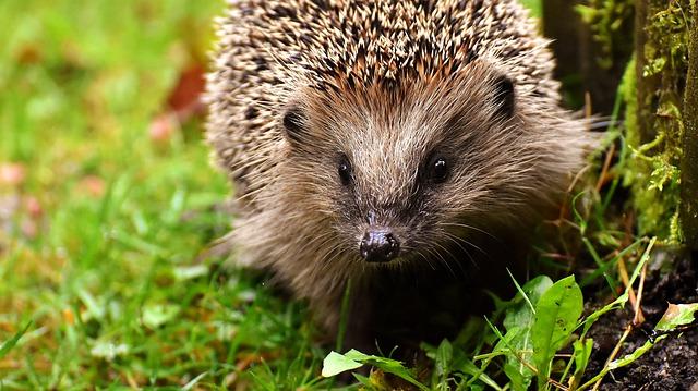 My Hedgehog Stickers messages sticker-7
