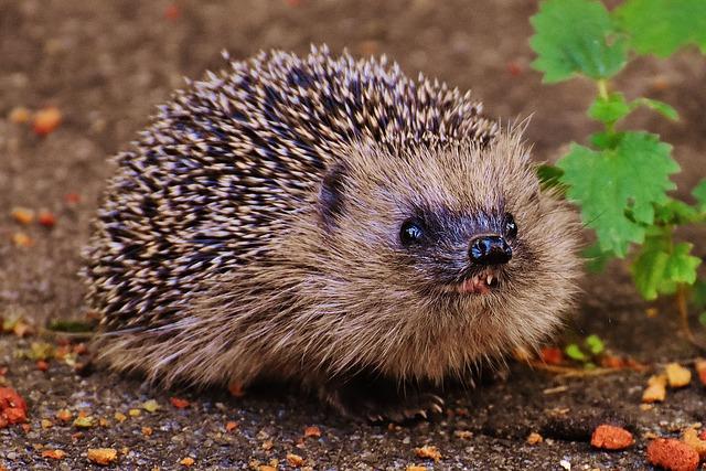 My Hedgehog Stickers messages sticker-10