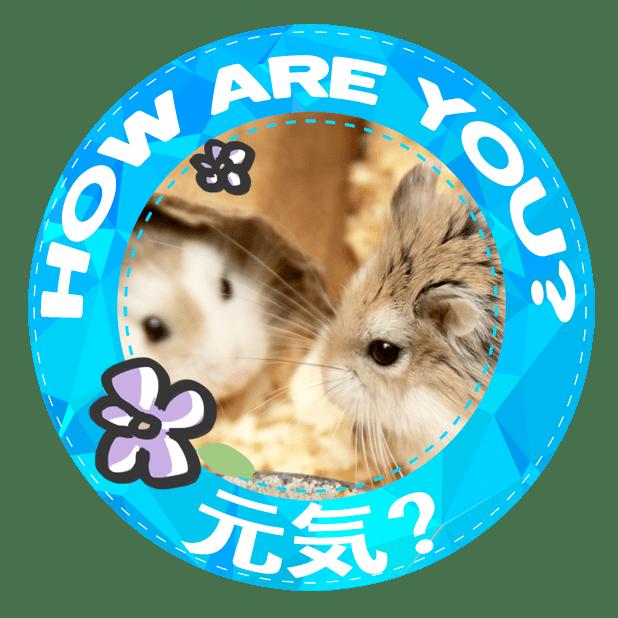 HammyVille 1 messages sticker-2