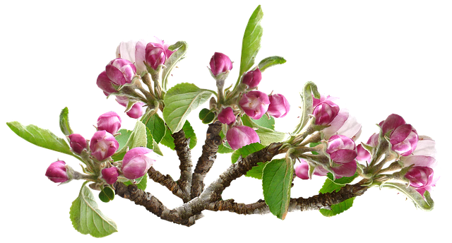 Apple Blossoms messages sticker-7