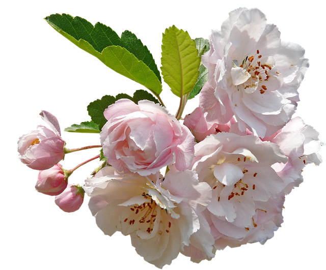 Apple Blossoms messages sticker-5