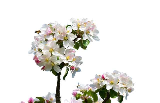 Apple Blossoms messages sticker-6