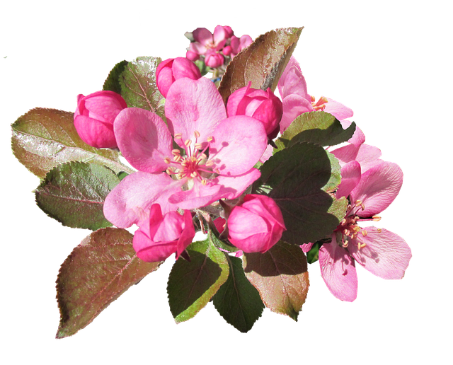 Apple Blossoms messages sticker-3