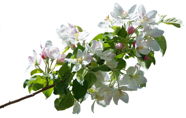 Apple Blossoms messages sticker-8