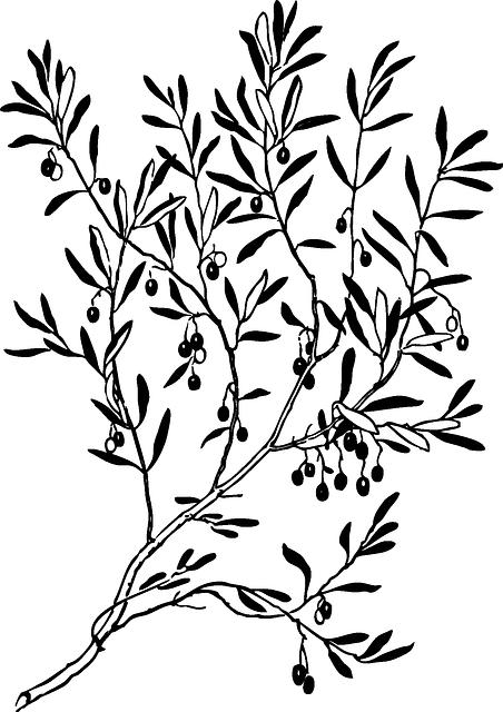 Olive Branch Stickers messages sticker-9