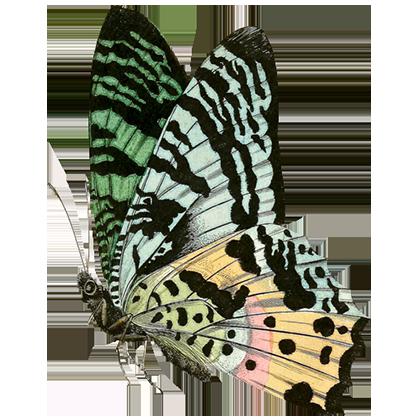 1001 Butterflies messages sticker-7