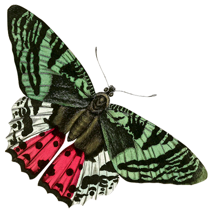 1001 Butterflies messages sticker-1