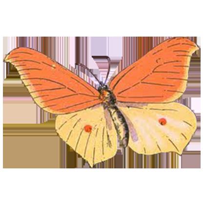 1001 Butterflies messages sticker-6