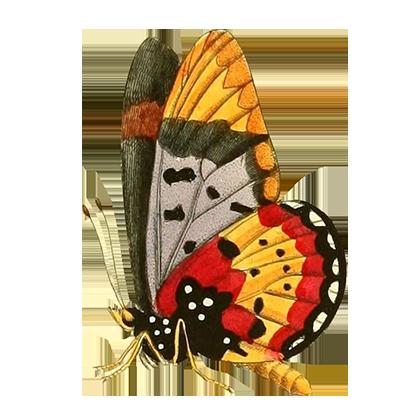 1001 Butterflies messages sticker-3