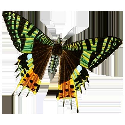 1001 Butterflies messages sticker-4