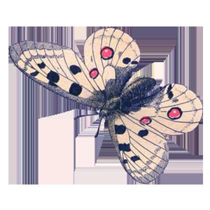 1001 Butterflies messages sticker-0