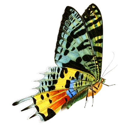 1001 Butterflies messages sticker-11