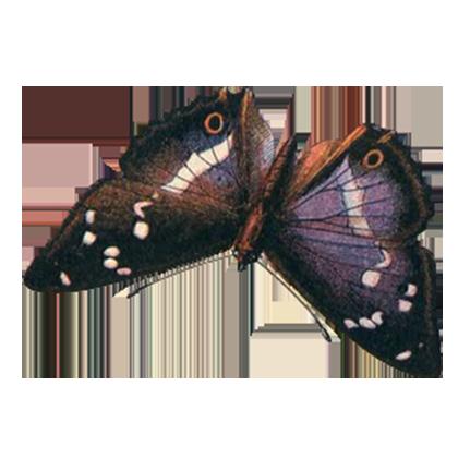 1001 Butterflies messages sticker-10