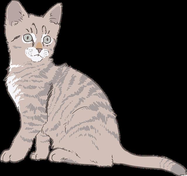 Cat Graphics messages sticker-5