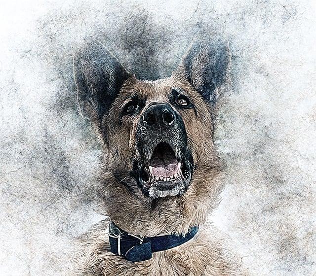 Pup Portraits messages sticker-8